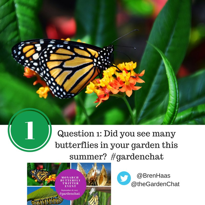 Question 1: Did you see many butterflies in your garden this summer?  #gardenchat <br>http://pic.twitter.com/1SEHfFmXoB