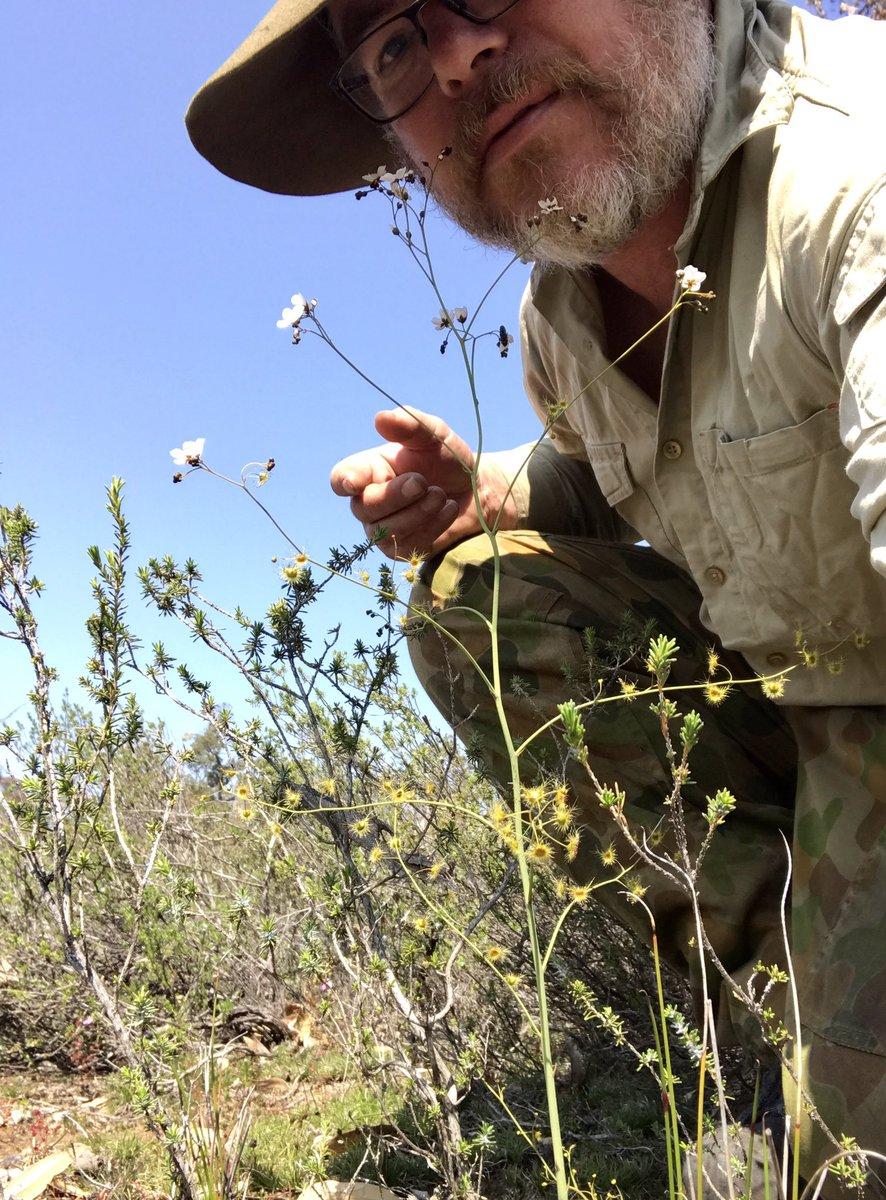It&#39;s called Drosera gigantea for a reason! #carnivore #westernAustralia #Droseraceae<br>http://pic.twitter.com/ChgnxBGY9D
