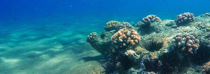 RNA Editing in Corals Stupefies Evolution  https://www. icr.org/article/10230/  &nbsp;   #Science #Biology <br>http://pic.twitter.com/fUiGH32hS3