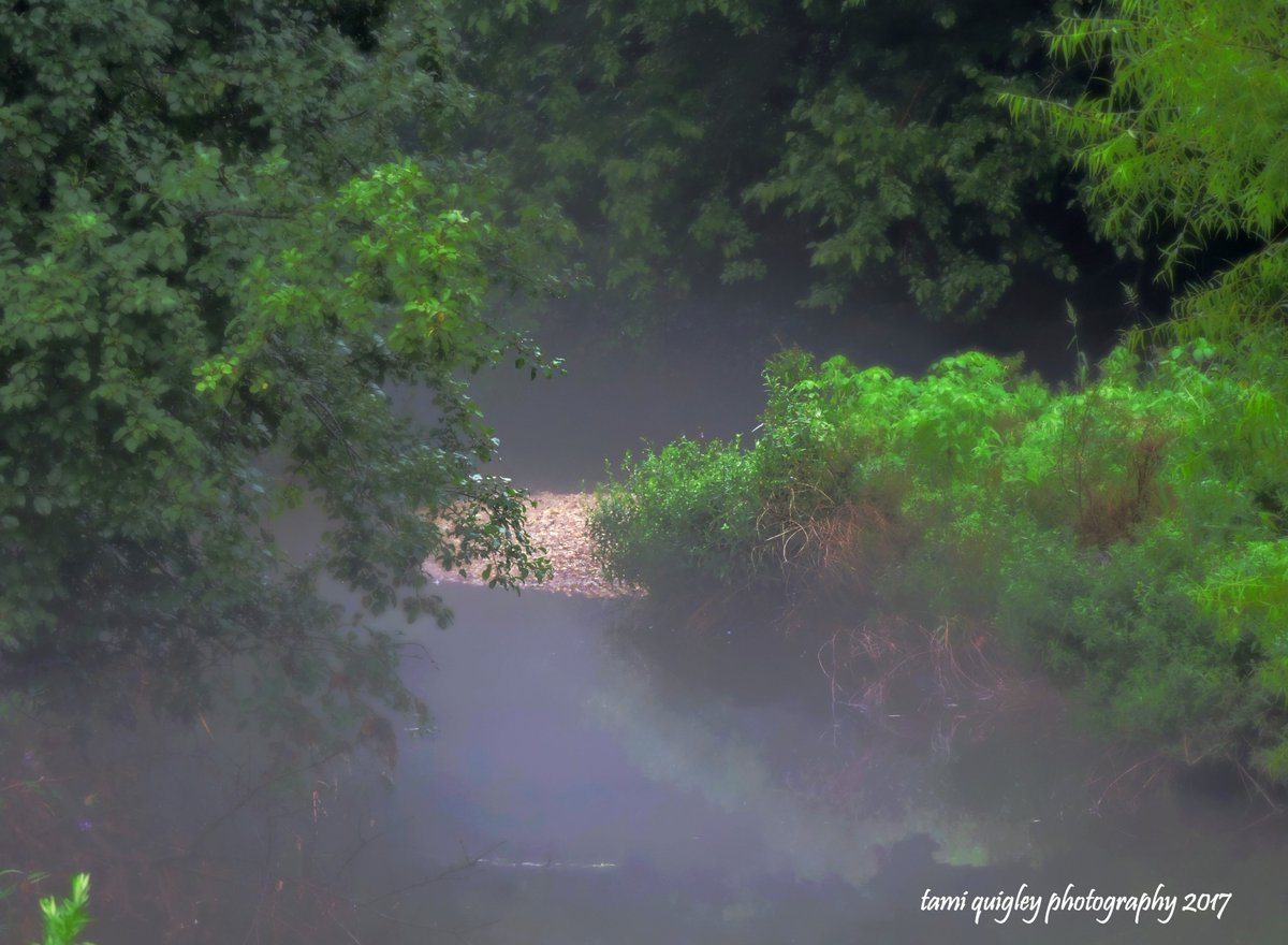 In The Mist Of A Summer Evening  https:// tami-quigley.pixels.com/featured/in-th e-mist-of-a-summer-evening-tami-quigley.html &nbsp; …  #MondayMotivation #art #prints #decor #gifts  #egallop @lehighvalleypa #LehighValley<br>http://pic.twitter.com/EsJ3IklRDq