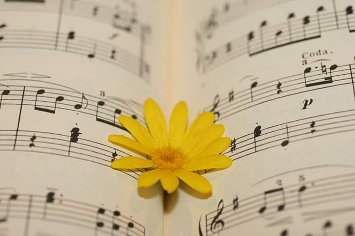 #Buongiorno da Amusart!  #19settembre #goodmorning #beautiful #beauty #flower #sheet #yellow #daisy ph. source  http:// goo.gl/dv9ner  &nbsp;  <br>http://pic.twitter.com/ydhV6Ndmia