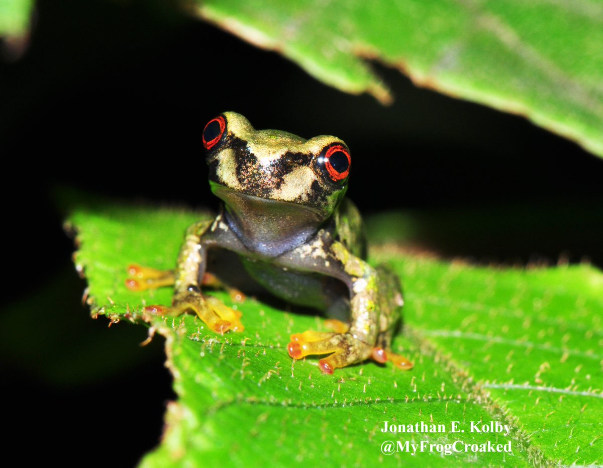 Thanks so much for your support of the #HARCC frog rescue program!  http://www. FrogRescue.com  &nbsp;  <br>http://pic.twitter.com/zwlsB09rvD
