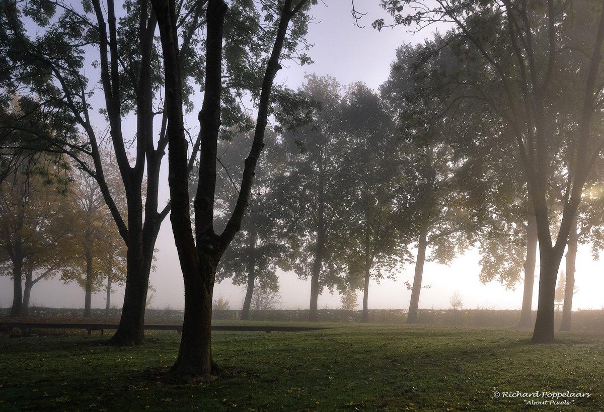 We zien weer eens #mist in de dageraad! Een gouden gloed lijkt de zon te verwelkomen voor een periode van mooi herfstweer @OPVoornePutten.