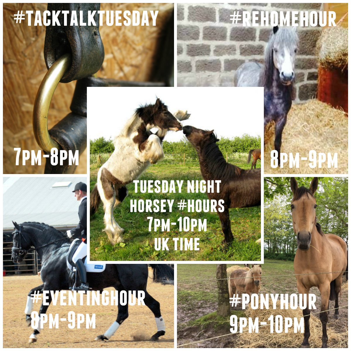 Tuesday&#39;s horsey chat hours to talk all things #equine &amp; #equestrian  7-8 #tacktalkTuesday 8-9 #eventinghour 8-9 #rehomehour 9-10 #ponyhour<br>http://pic.twitter.com/AhpJWTANXS