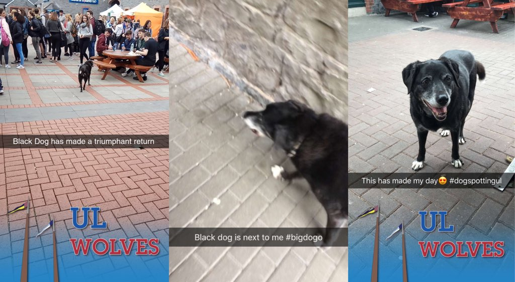 A celebrity has returned to UL today, as countless students informed us via snapchat.  #StudyAtUL #DogSpottingUL<br>http://pic.twitter.com/i7B8CdWPZS