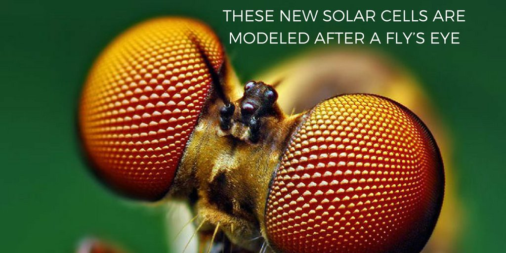Stanford University researchers have discovered an alternative to silicon that can be used in #solar panels  http:// ow.ly/7ItG30fgwOe  &nbsp;  <br>http://pic.twitter.com/uMhzeTE4TD