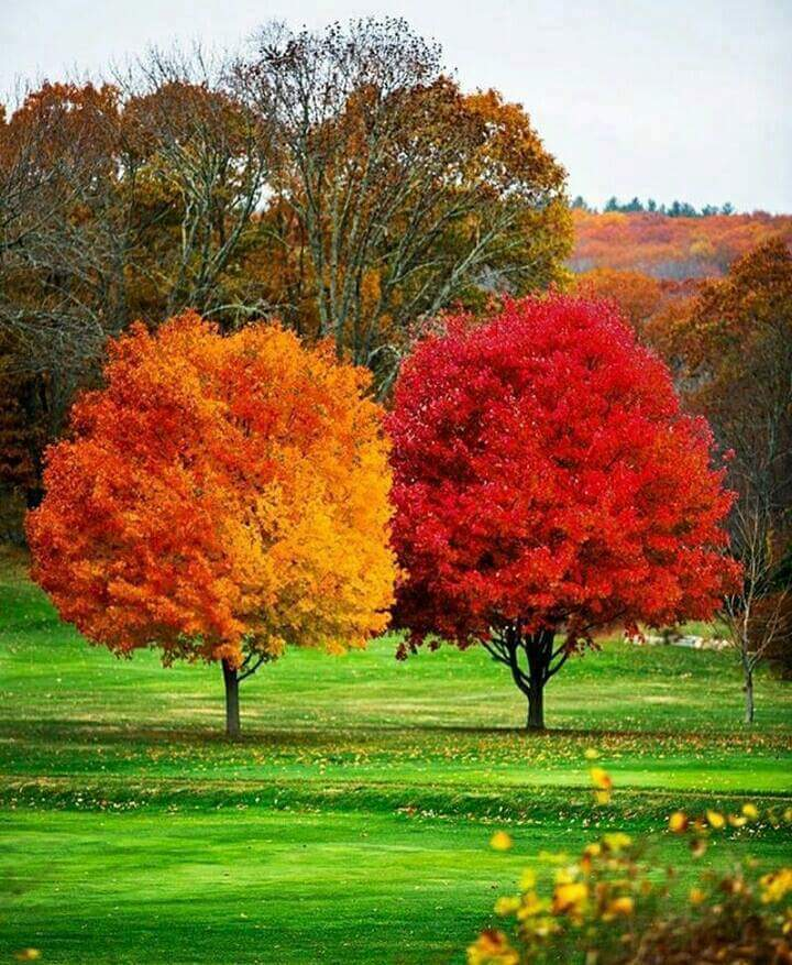 #Trees of different #Colors #Planet #Earth<br>http://pic.twitter.com/8X0b2U527I