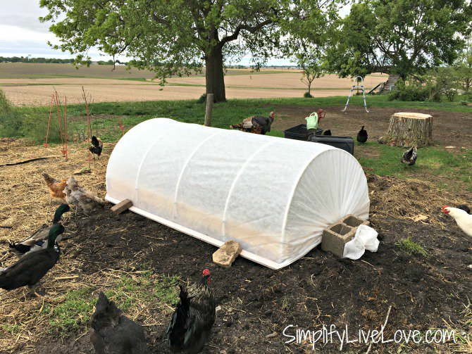 How to Cover a Raised Garden Bed to Extend Your Growing Season via @simplivelove  http://www. simplifylivelove.com/how-to-cover-a -raised-garden-bed/ &nbsp; …  #gardenchat #tuesdaysinthegarden<br>http://pic.twitter.com/THSBLGoRYV