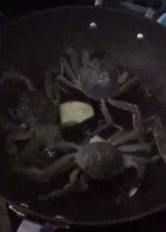 Caranguejo escapa de panela e desliga fogão pra salvar 'companheiros' https://t.co/mOnkWwiufj