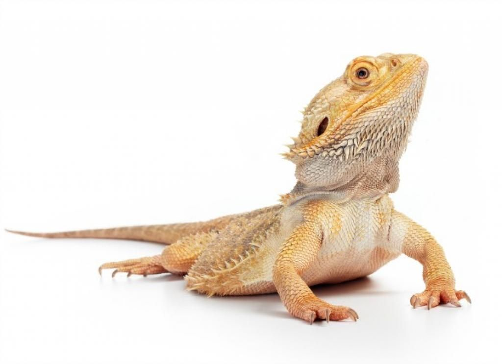 The 5 best #Reptiles and Amphibians for kids  https:// buff.ly/2fvAJMz  &nbsp;   via @petMD #Pets<br>http://pic.twitter.com/NkjEe7fV68
