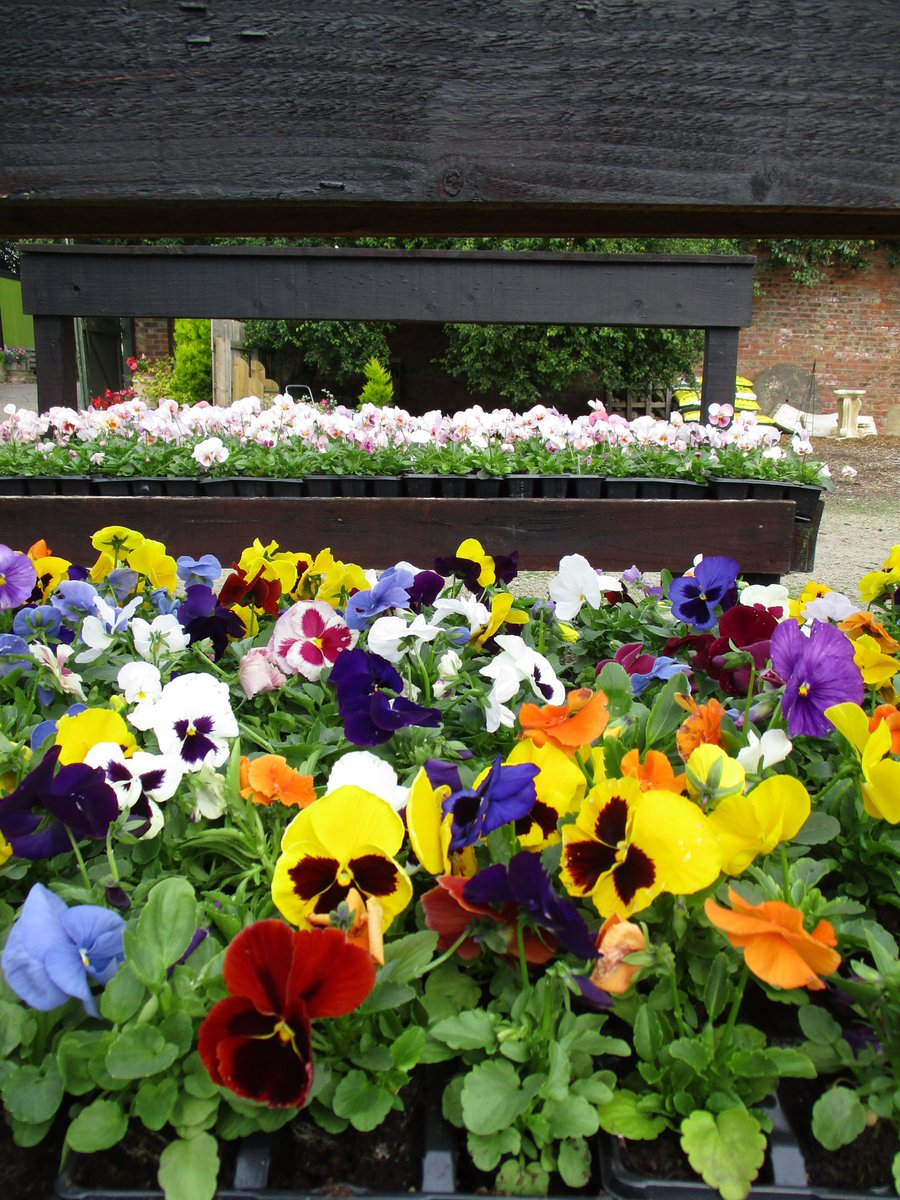 Add some colour to your #Autumn #planters #Winterbedding available from our garden nursery #Ripon<br>http://pic.twitter.com/XJhPeDrljl