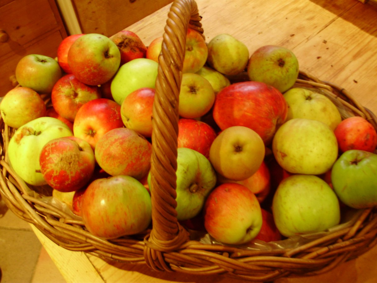 Sept #organic #peatfree #fruit blog. The joy of #seasonal #eating. Why must apples be stored? Scrumptious #history  http:// nickykylegardening.com/index.php/blog /526-the-fruit-garden-and-orchard-in-september-2017 &nbsp; …  …<br>http://pic.twitter.com/sT0RTwCa8T