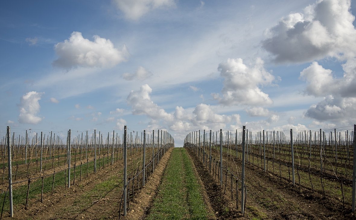 Производство вина реферат