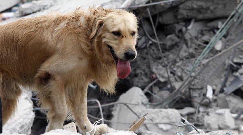 Luego de sismo de México hay mascotas solas y asustadas, están pidiendo ayuda para ellos.