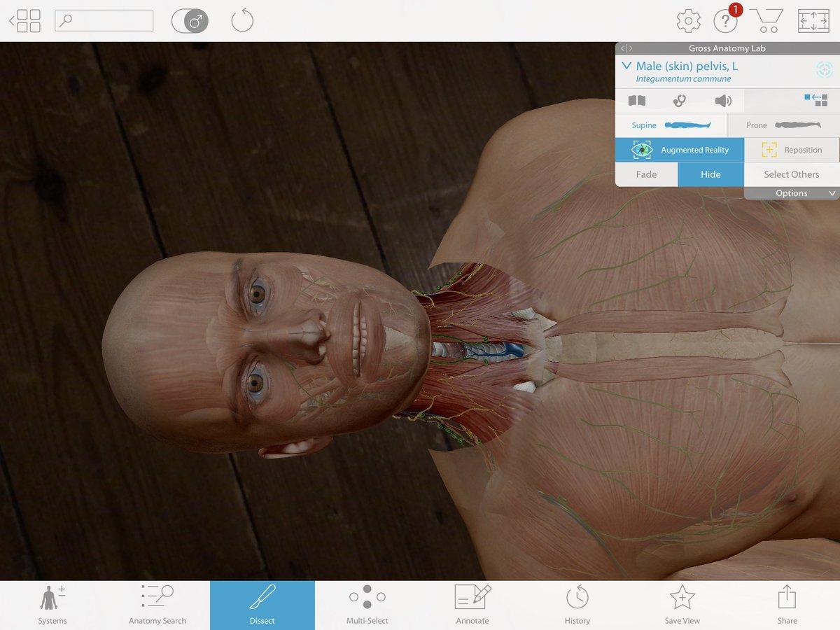 Faye Nicole Ellis On Twitter Playing With Human Anatomy Atlas App