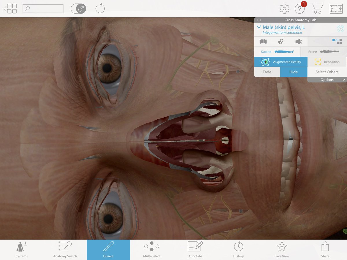 Faye Ellis On Twitter Playing With Human Anatomy Atlas App In My
