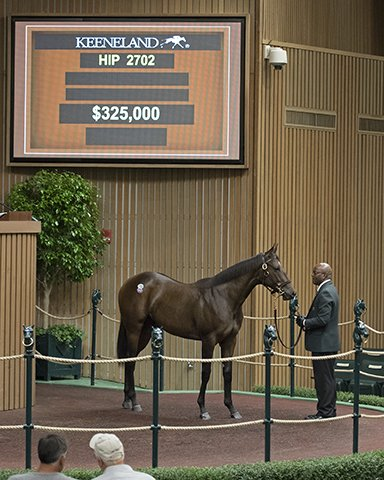 #WarriorsReward filly from @WarrendaleSales for Hargus and Sandra Sexton and SilverFern brings $325k from #LiveOak @keenelandsales <br>http://pic.twitter.com/GUpX8Dcv3N