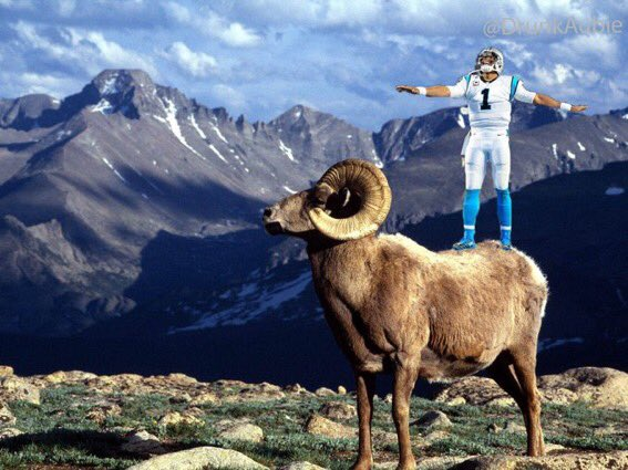 100 goats on twitter you ve heard of elf on the shelf now get