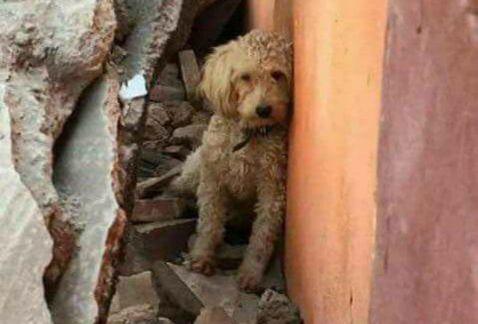 ¿Perdiste a tu mascota durante el #sismo? Aquí un listado de perros encontrados en la #CdMx https://t.co/nXfI8slj4t