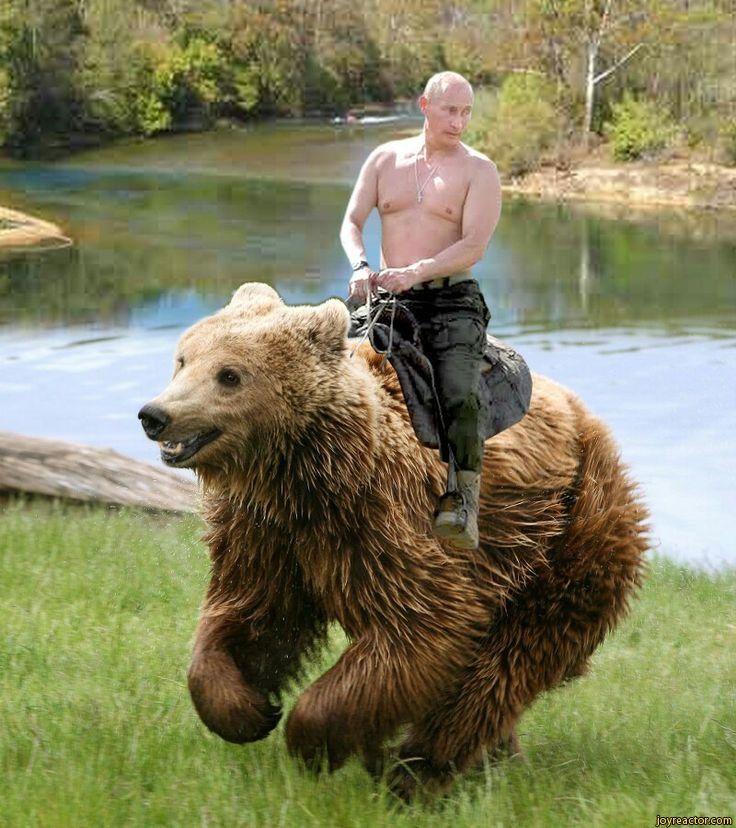 Putin Wrestling A Bear - Pro Wrestling Star