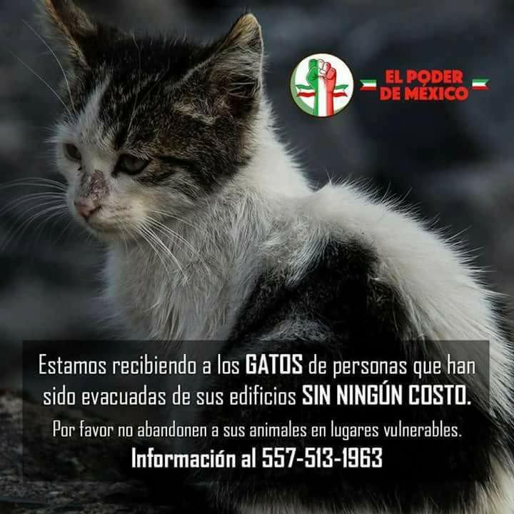 Apoyo para mininos rescatados  #FuerzaMexico https://t.co/eE80gY3rS0