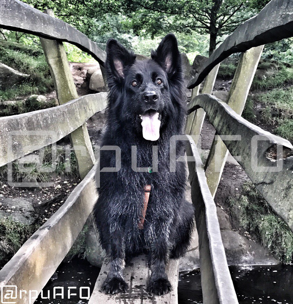 This little girl thinks you should follow her brave #AFO Dad @rpuAFO #dogsoftwitter #charitychallenge #Police   #FinnsLaw<br>http://pic.twitter.com/0ZZIFu6lxk