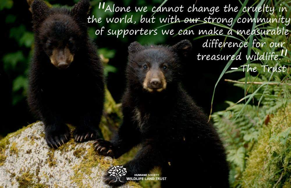 The Trust is stronger with our dedicated #wildlife supporters! #WildlifeWednesday <br>http://pic.twitter.com/Yz3DxdYjHA