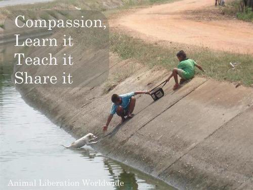 Not every act of #compassion  requires #heroism but every time you&#39;re #compassionate you are a #hero to someone  Ask the #dog?  #anipals<br>http://pic.twitter.com/REaShZV6Sw