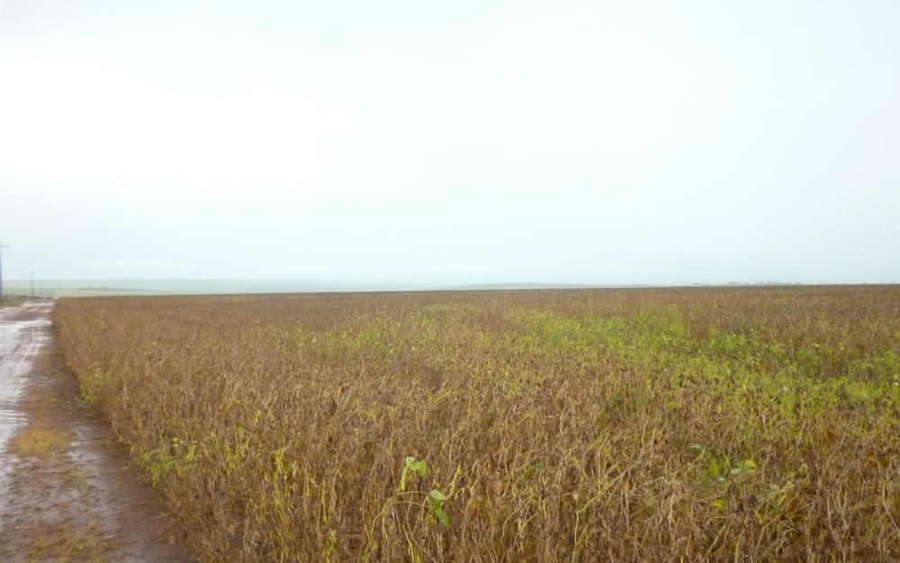 Anvisa proíbe comercialização de herbicida associado à doença de Parkinson https://t.co/ZwHs59WaD6 #G1