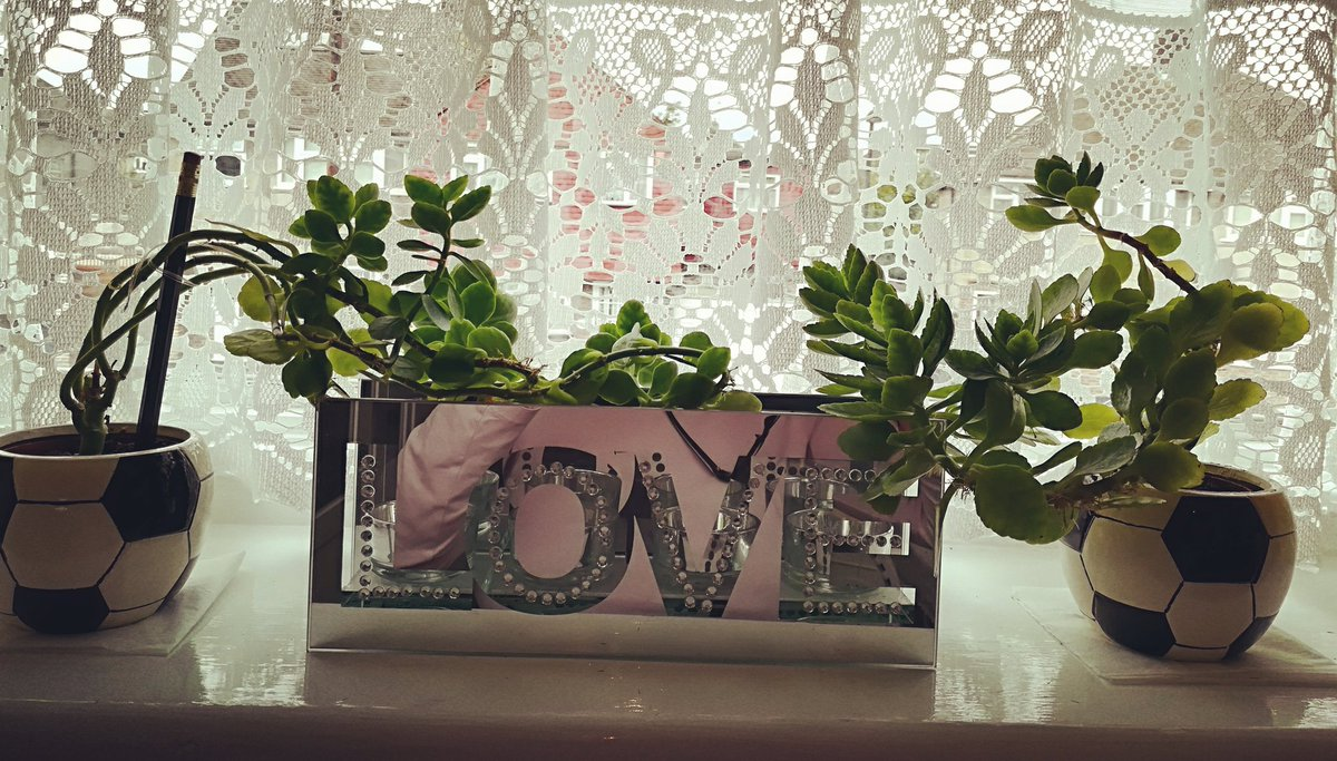 The #power of #love and the power of words... even these #plants #wisdom have grown in the #direction of Love.... #DrMasaruEmoto @DrStamenov<br>http://pic.twitter.com/gPGMGUX38T