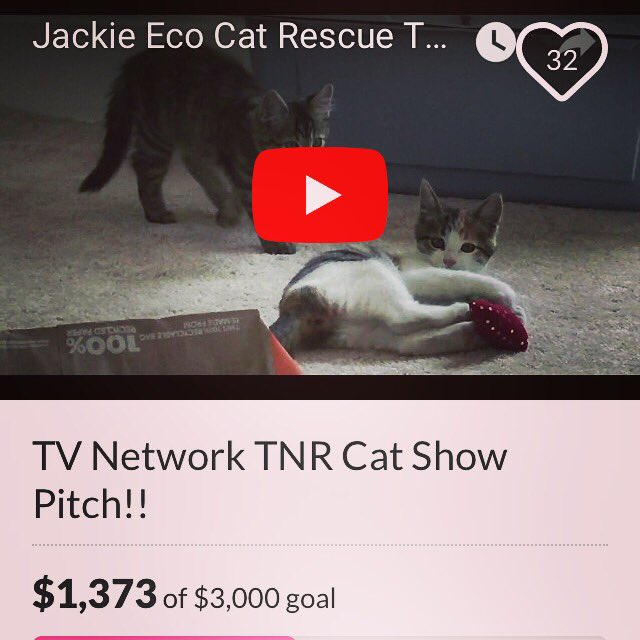 MyTV Show to #EDUCATE &amp; #SaveThemAll &#39;s:  http:// gofundme.com/JackieEcoRescu  &nbsp;  … #JackieEcoRescueShow #NOkilll #AdoptDontShop #LetsFixThis #Cats #ECO<br>http://pic.twitter.com/zu1qmdmxUp