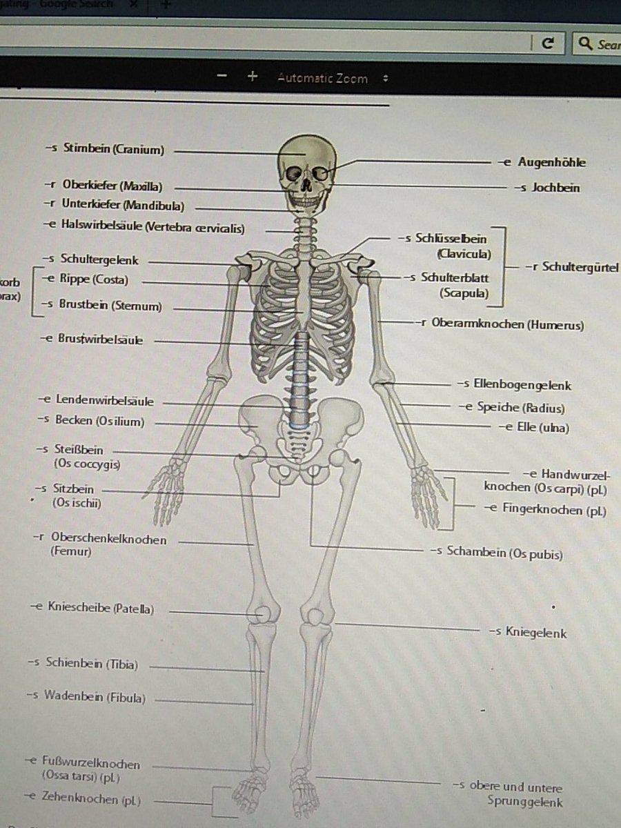 Berühmt Anatomie Knochen Lernkarten Bilder - Anatomie Ideen ...