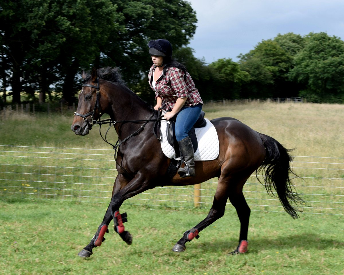 Stuck for #Christmas gift ideas? Look no further, book today!  https://www. chirp.directory/united-kingdom /professional-services/ice-storm-studios &nbsp; …   #ChirpDirectory #BizHour #Worcestershire #equine #pet<br>http://pic.twitter.com/ZtdrHUEabq