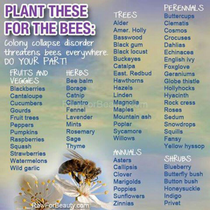 ATTRACT BEES TO YOUR GARDEN  https://www. facebook.com/theseedguy/  &nbsp;                          #gardenchat #seeds #preppers<br>http://pic.twitter.com/XDSvomnCbB