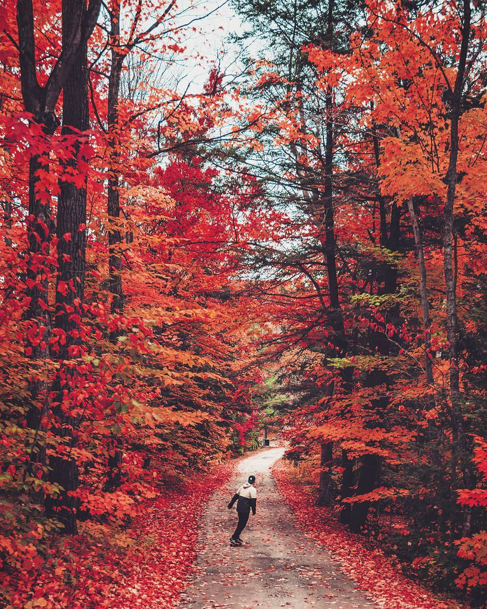 A1. We can't wait for the vibrant colours this fall! 📷: Jayeffex via I...
