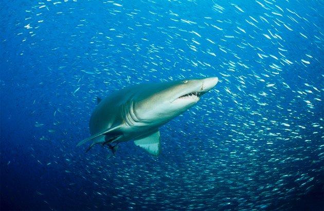 Sharks can live a lot longer than researchers realized  https://www. nature.com/news/sharks-ca n-live-a-lot-longer-than-researchers-realized-1.22626 &nbsp; …  Video  https://www. youtube.com/watch?v=MUl08w 6QC2E &nbsp; …  #sharks #biology <br>http://pic.twitter.com/ANBx5mRne8