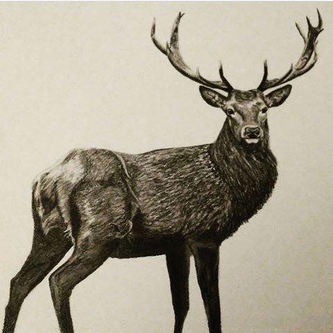 Deer I drew  #drawing #art #artwork #deer #sketch  #charcoal #charcoaldrawing #fineart #animal #sketchbook #Artist #Pencildrawing #pencil <br>http://pic.twitter.com/C5IEWbjfBF