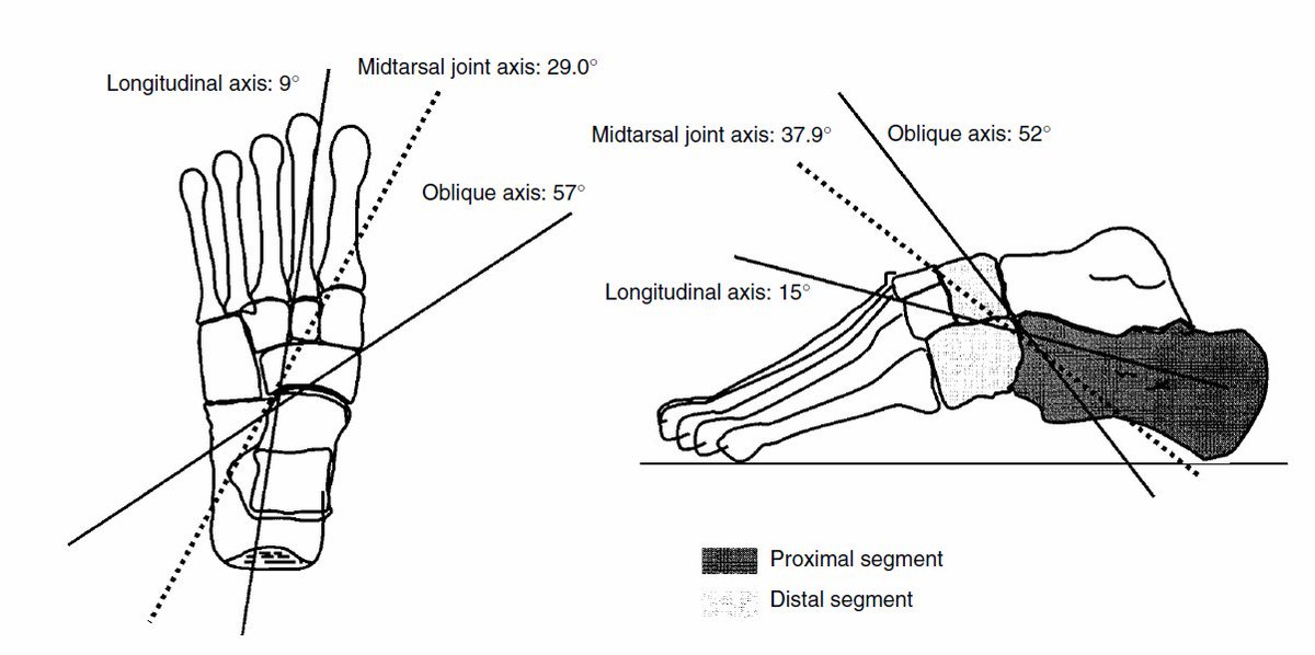 Mid Tarsal Joint Diagram - Electrical Work Wiring Diagram •