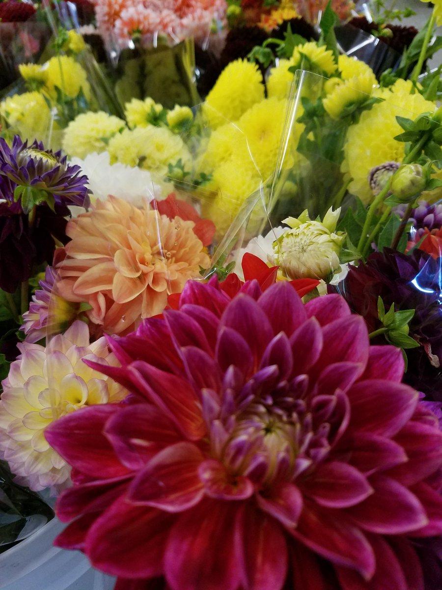 Market flowers on twitter in our coolers right now dahlias and market flowers on twitter in our coolers right now dahlias and lots of dahlias flowers mngrown wedding weddingflowers minnesotawedding nofilter izmirmasajfo