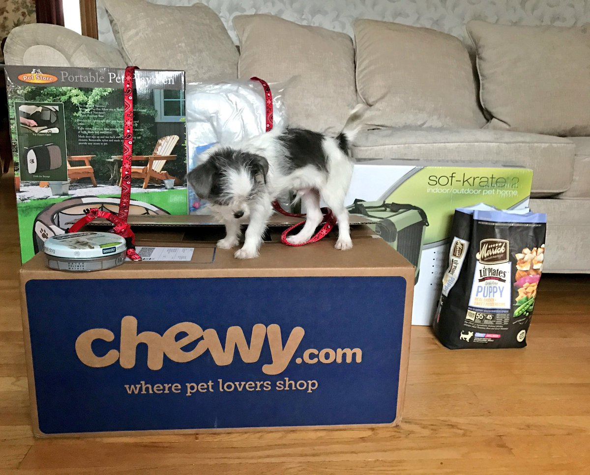 Krista On Twitter New Puppy Haul From At Chewy Teddy Is A Very Happy