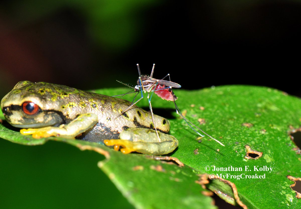 Protecting biodiversity is about more than just animals; it helps prevent #disease emergence  http://www. FrogRescue.com  &nbsp;   #Health4Security #HARCC <br>http://pic.twitter.com/gLDHvewVXq