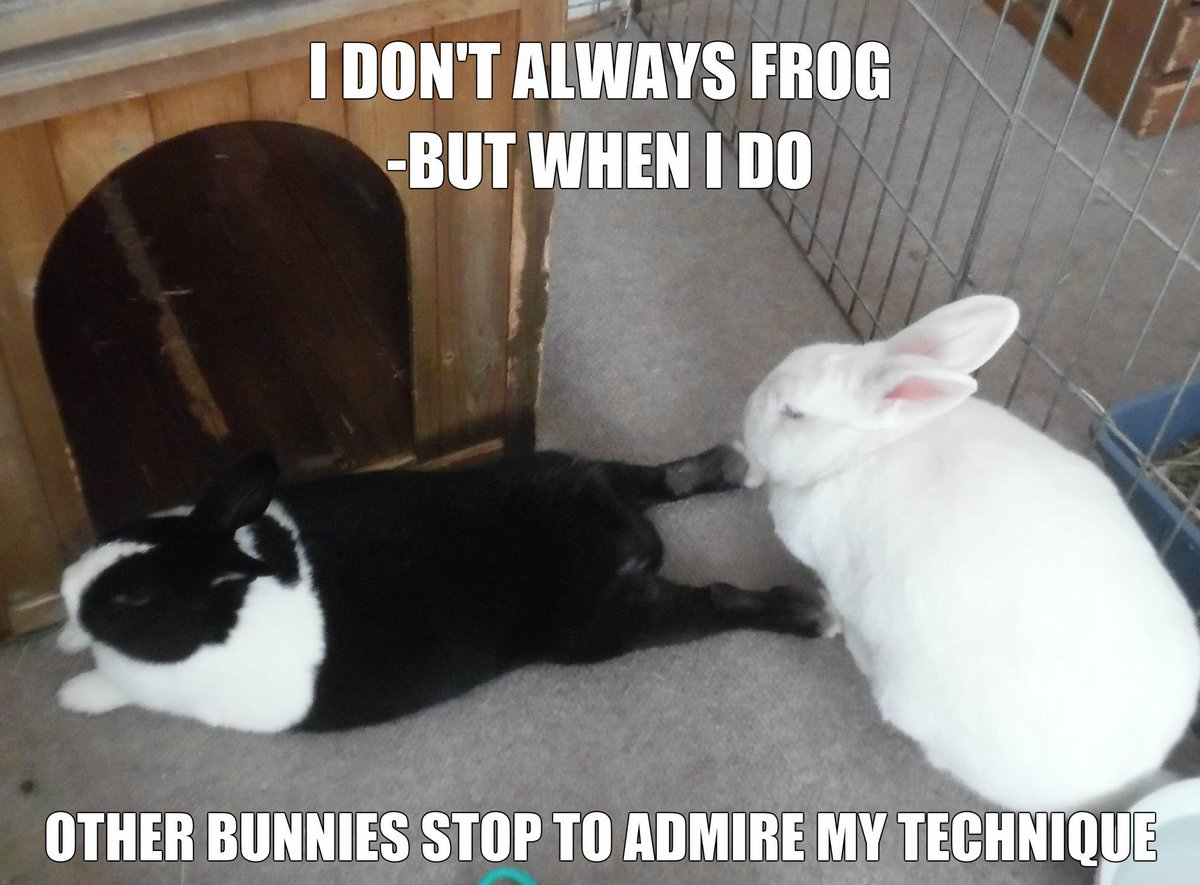 Owning it! #rabbit #rabbits #cuteanimals #cuteanimal #bunny #bunnies #pet #pets #frog <br>http://pic.twitter.com/A4E16P6dPY