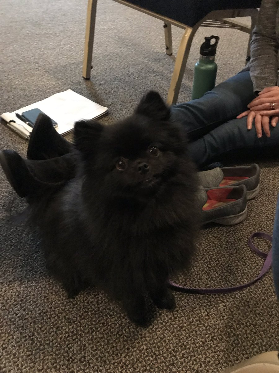 Hangin' out with #Penny the #Pomeranian today at our therapeutic campus in Corvallis. She's a ray of sunshine on this rainy Wednesday!  🐾☀️
