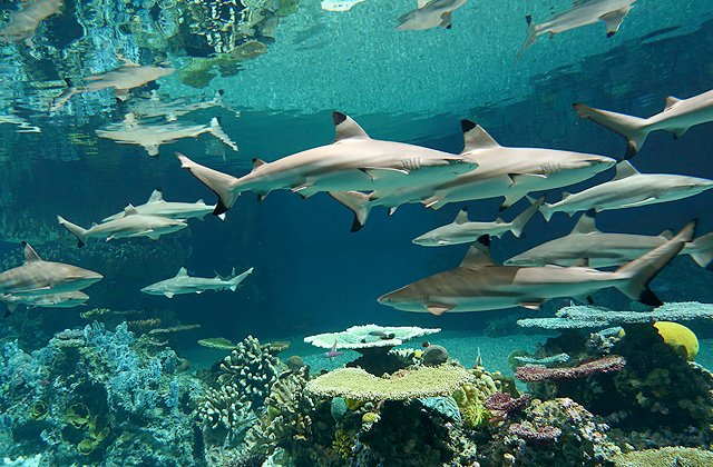 Good care of #sharks in aquaria can have big education &amp; conservation benefits. New study.  https:// goo.gl/PU9ZbQ  &nbsp;   ( National Aquarium)<br>http://pic.twitter.com/NeIjGuRtZw