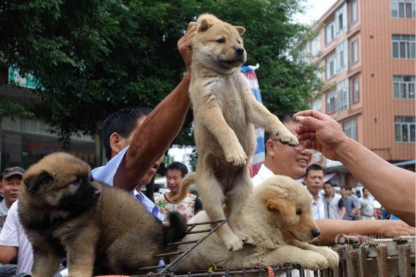 #YULIN #DOG #EATING #FESTIVAL.... DOES ANYONE CARE?  STOLEN PETS FROM OTHER PROVINCES &amp; LOVING HOMES, CATS ARE ALSO SKINNED &amp; BOILED ALIVE. <br>http://pic.twitter.com/M0Zv4e9TVF