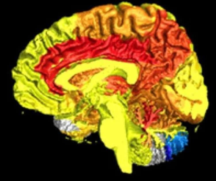 Women have more active brains than men, according to science https://t.co/ctjcyWx4ae