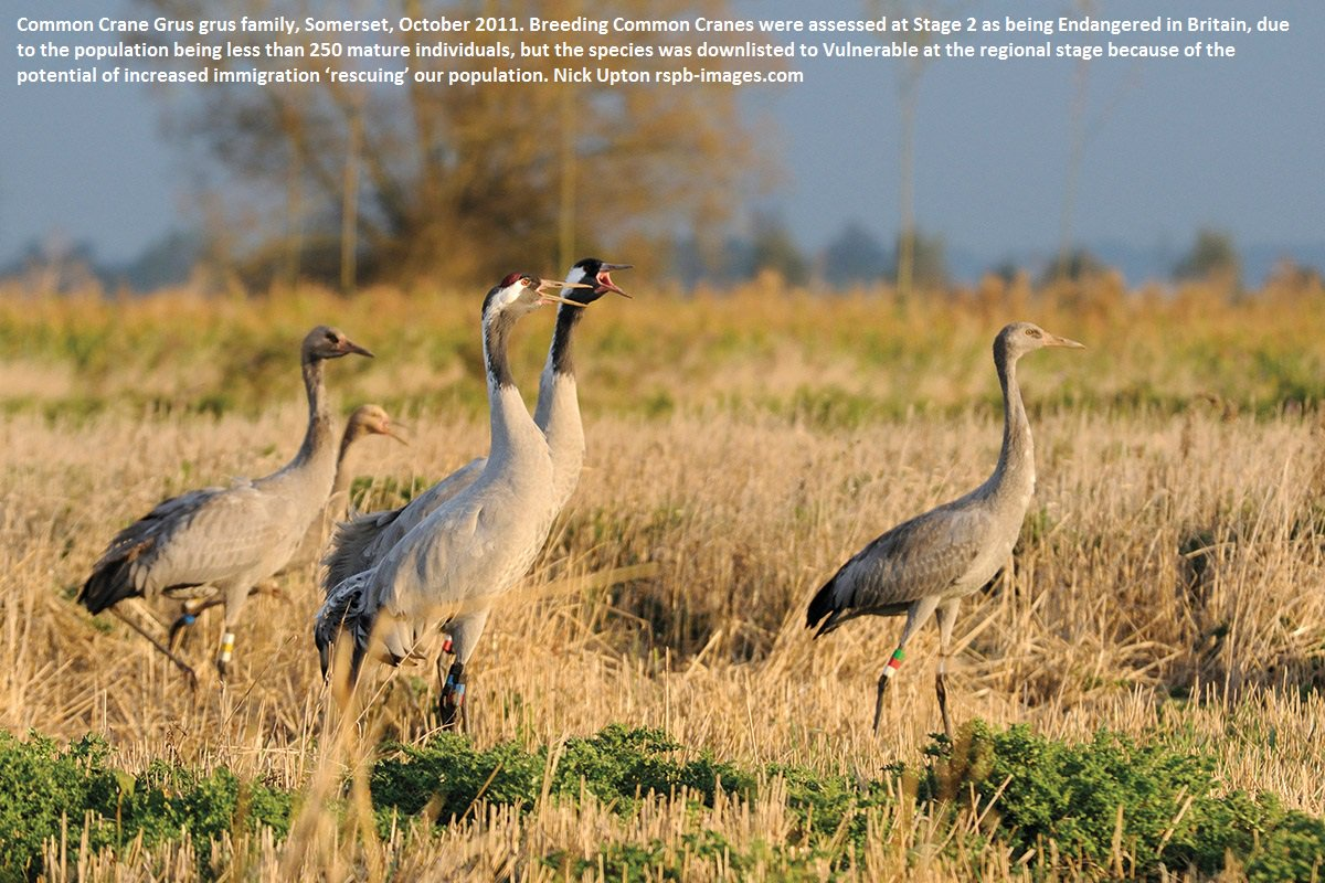 In September&#39;s @britishbirds  The risk of extinction for birds in Britain  #ornithology #conservation @RSPBScience   https:// britishbirds.co.uk/article/risk-e xtinction-birds-great-britain/ &nbsp; … <br>http://pic.twitter.com/6BOI6hqdUy