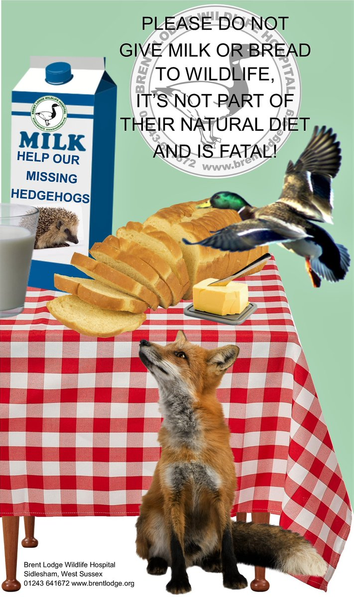 test Twitter Media - Please help share this important message! #wildlife #helpahog #nomilknobread https://t.co/8ySDXUIQg2