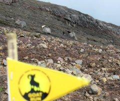 Goat Run 2017 – Mt. Agung • 2017