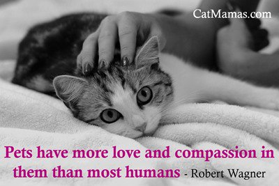 I&#39;m still amazed at how much love our precious animals can give back! So rewarding! #loveanimals #pets<br>http://pic.twitter.com/AYVtGHIIeW